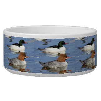Couple of goosander ducks bowl