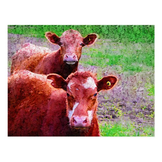 Couple of Old Cows Postcard