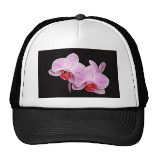 Couple Of Pink Orchids Trucker Hat