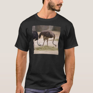 Couple Ostriches eating T-Shirt