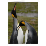 Courting King Penguins Greeting Card