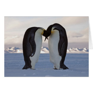 Courtship - Emperor Penguins Greeting Card