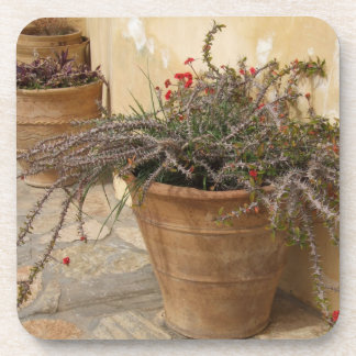 Courtyard Plant Coasters