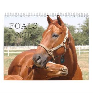 cover DSC_0118 a email,  Foals 2010, FOALS2010 Calendar