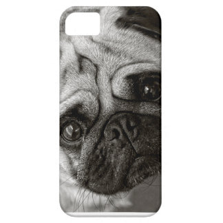 cover of telephone with fotograria of Carlino iPhone 5 Cases