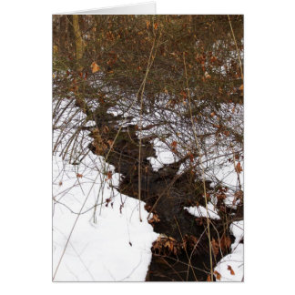Covered Snow Brook notecard Greeting Card