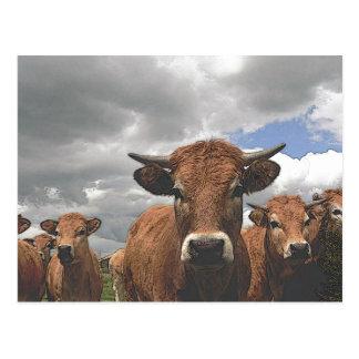 cow15 postcard