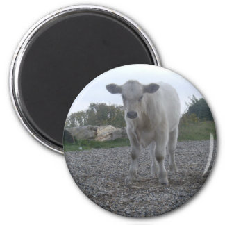 Cow 2 Inch Round Magnet