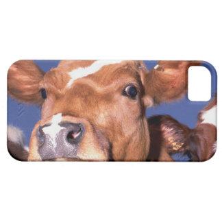 cow 2 iPhone SE/5/5s case