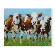 Cow#340 Postcard