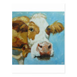 Cow#348 Post Card