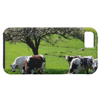 Cow among blooming apple trees in Normandy iPhone SE/5/5s Case