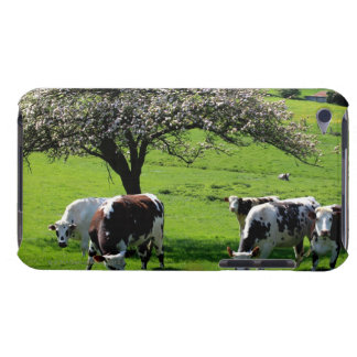 Cow among blooming apple trees in Normandy iPod Touch Case