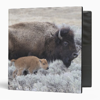 Cow and Calf Bison, Yellowstone 2 Binder