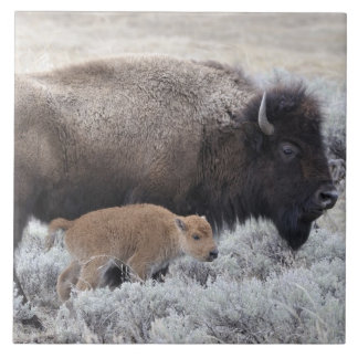 Cow and Calf Bison, Yellowstone 2 Ceramic Tile