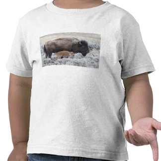 Cow and Calf Bison, Yellowstone 2 T Shirt