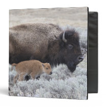 Cow and Calf Bison, Yellowstone Binder