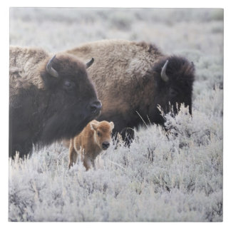 Cow and Calf Bison, Yellowstone Ceramic Tile
