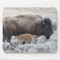 Cow and Calf Bison, Yellowstone Mouse Pad