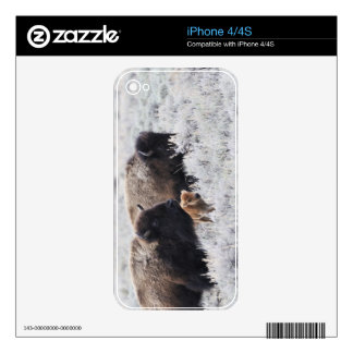 Cow and Calf Bison, Yellowstone Skin For The iPhone 4