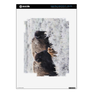Cow and Calf Bison, Yellowstone Skins For iPad 3