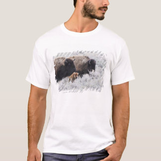 Cow and Calf Bison, Yellowstone T-Shirt