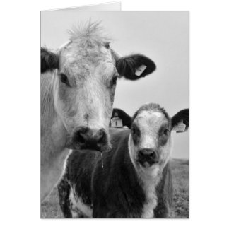 Cow and calf card