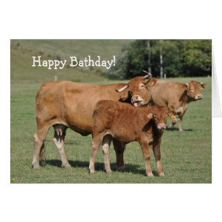 Cow and calf Happy Bathday! birthday Card