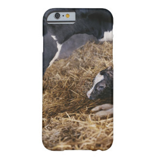 Cow and Calf in Hay Barely There iPhone 6 Case