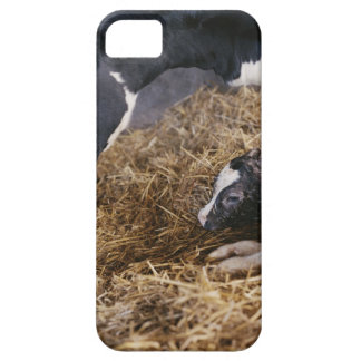 Cow and Calf in Hay iPhone SE/5/5s Case