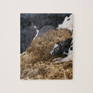 Cow and Calf in Hay Jigsaw Puzzle