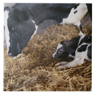 Cow and Calf in Hay Tile