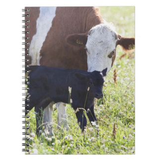 Cow and calf notebook