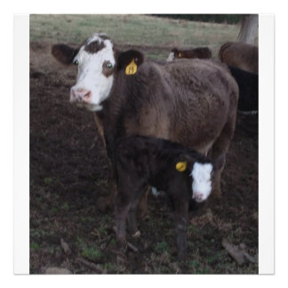 cow and calf photo print