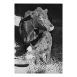 Cow and Calf Poster