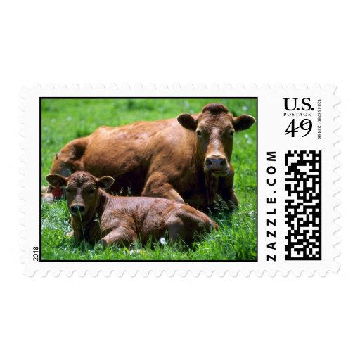 Cow And Calf Stamp