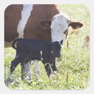 Cow and calf sticker