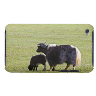 Cow and calf Yak, Lijiang iPod Case-Mate Case