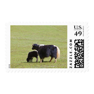 Cow and calf Yak, Lijiang Postage