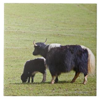 Cow and calf Yak, Lijiang Tiles