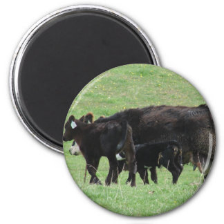 Cow and Calves Magnet