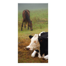 Cow and horse card