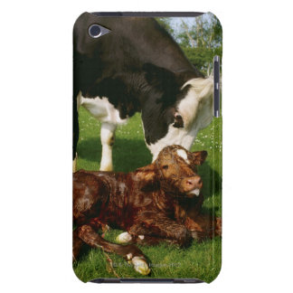 Cow and newborn calf barely there iPod cover