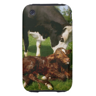 Cow and newborn calf tough iPhone 3 cover