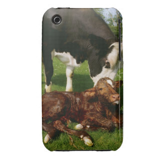 Cow and newborn calf iPhone 3 Case-Mate cases
