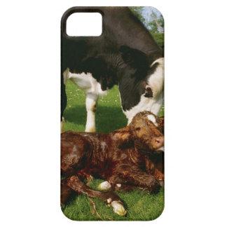 Cow and newborn calf iPhone SE/5/5s case