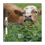 Cow and stinging nettles dry erase board