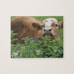 Cow and stinging nettles jigsaw puzzles
