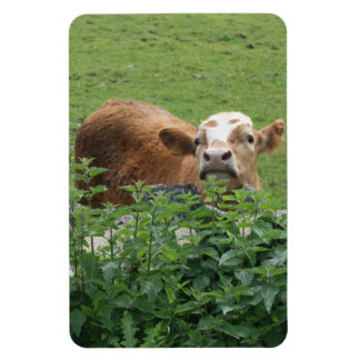 Cow and stinging nettles magnet