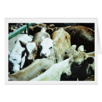 Cow Babies Card